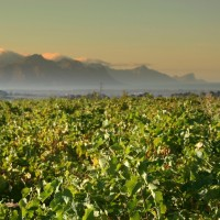 Sea View over Chenin vineyard